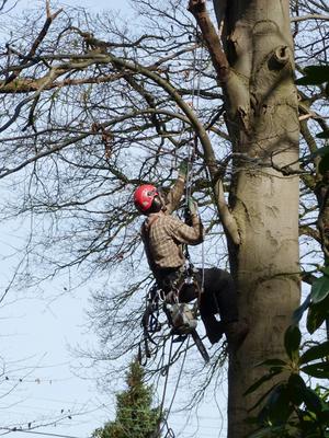 Bart Denies  - Snoeien en vellen van bomen